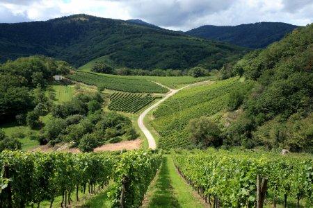 Photo pour Vignoble et petit village en alsace - france route des vignes en alsace - france, village dans le massif des vosges. vignoble. pays français. - image libre de droit