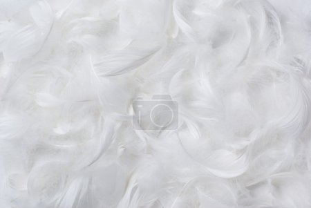 Feathers background