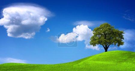 Green landscape panorama