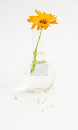 Foto de La imagen de guisantes homeopáticos y una hierba en un matraz - Imagen libre de derechos