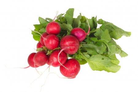 Photo for Bunch of radishes photo on the white background - Royalty Free Image