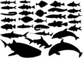 Fish vector set