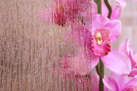 Foto de Orquídea detrás de las vidrieras - Imagen libre de derechos