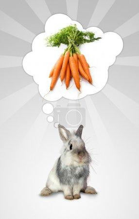 The rabbit's think