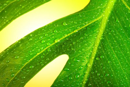 Photo for Green leaf with drop - Royalty Free Image