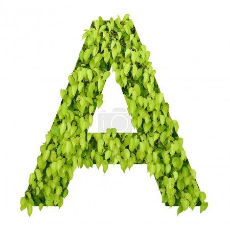 """Green alphabet. letter """"a"""""""