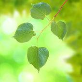 Beautiful green leaves