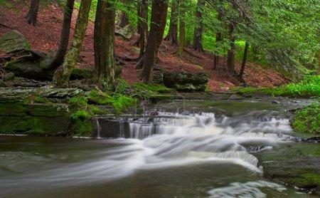 Photo pour Un flux avec les petites chutes d'eau dans une zone boisée - image libre de droit