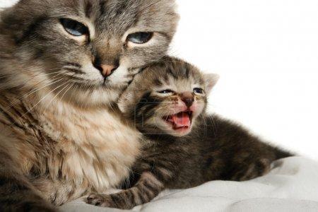 Cat and her kitten sleep