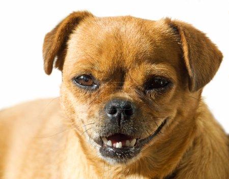 Doggy portrait