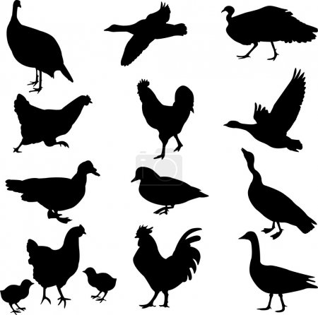 Poultry silhouettes collection