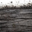 Bicycle tracks through wet mud bordered on top by ...