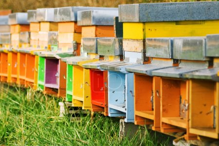 Coloured beehives