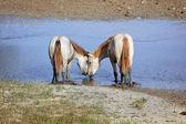 Ló szerelmes