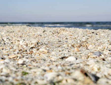 Sand and shells on beach.