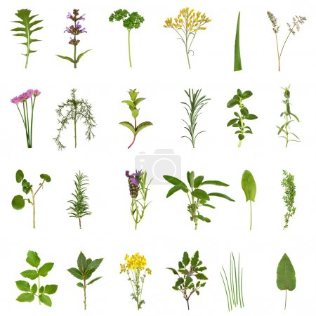 Photo for Large medicinal and culinary herb flower and leaf selection isolated over white background. - Royalty Free Image