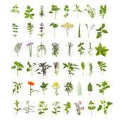 Velké rostliny list a květ kolekce