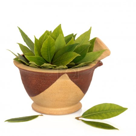 Photo for Bay herb leaves in a clay mortar with pestle, isolated over white background. - Royalty Free Image