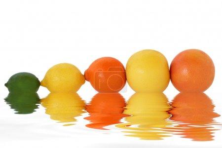 Photo pour Rubis rouge et jaune pamplemousse, orange, citron et citron vert agrumes en ligne avec le reflet dans l'eau ridée, sur fond blanc. - image libre de droit