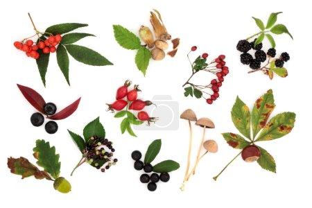 Photo pour Récolte automnale de fruits sauvages, noix et baies aux feuilles, isolés sur fond blanc . - image libre de droit