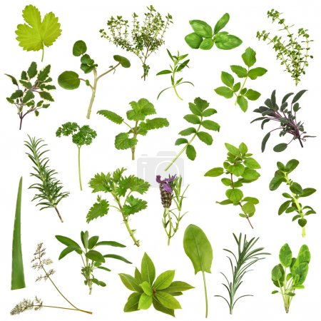 Photo for Large herb leaf selection in abstract design over white background. - Royalty Free Image