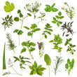 Large herb leaf selection in abstract design over ...