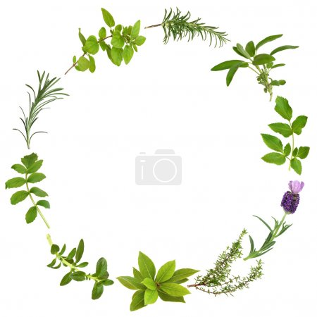 Photo for Medicinal and culinary herbs in an abstract circular design, over white background. - Royalty Free Image