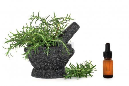 Photo for Rosemary herb leaves in a granite mortar with pestle and aromatherapy essential oil glass dropper bottle, over white background. - Royalty Free Image