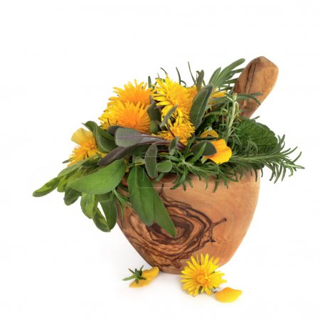 Wild Flowers and Herbs