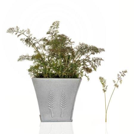 Bronze Fennel Herb