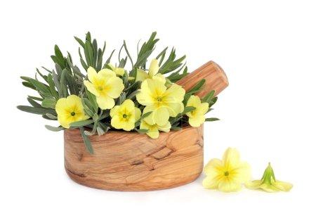 Primrose Flowers and Lavender Herb