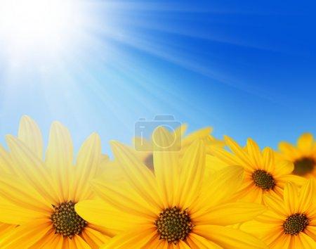 Photo pour Fleurs jaunes au soleil et ciel bleu, fond de printemps - image libre de droit