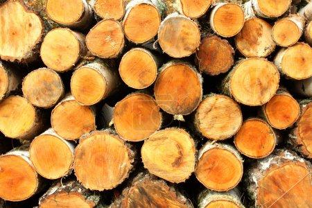 Photo pour Contexte des troncs coupés dans la forêt - image libre de droit