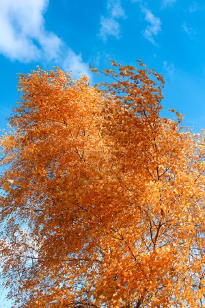 Fall - gold autumn landscape