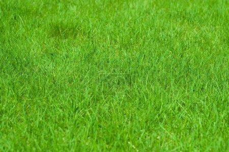 Photo pour Vue rapprochée de l'herbe verte sur le stade par temps ensoleillé - image libre de droit