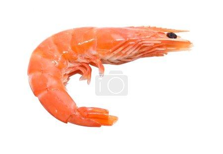 Photo pour Grandes crevettes isolées sur fond blanc - crevette géante - image libre de droit