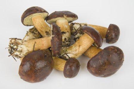 Few edible mushrooms on white background