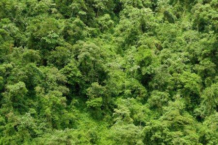 Photo pour Fond de forêt tropicale luxuriante jungle verte - image libre de droit