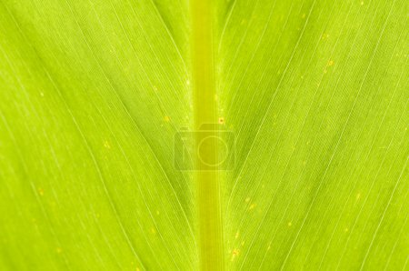 Photo for Macro close up of green leaf - Royalty Free Image