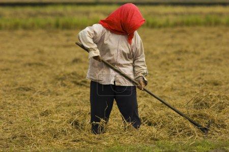 Photo pour Cultures agricoles - image libre de droit