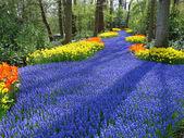 Lane barevné jarní květiny