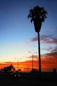 Seashore palm trees at Sunrise