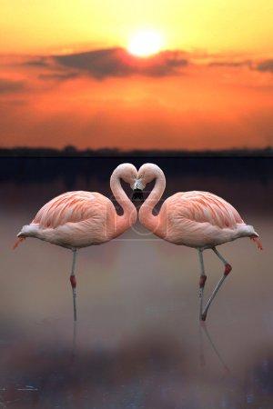 Love Heart Flamingo