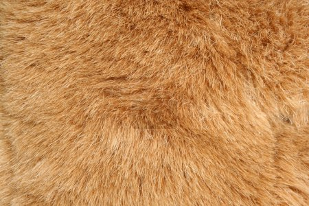 Brown fur background texture