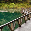 Lake in green with wooden walkway in the forest....