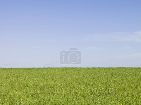 Photo for Summer meadow with yellow flowers and blue sky - Royalty Free Image