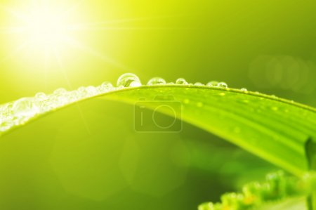 Photo for Green leaf with dews in morning - Royalty Free Image