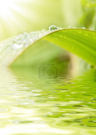 Photo for Green grass with raindrops background - Royalty Free Image