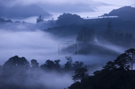 Morning fog at Tea Farm.