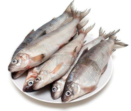 Fresh fish whitefish on plate